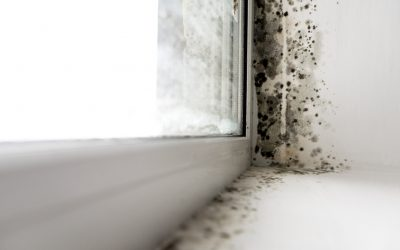 Our process in managing damp and condensation in homes